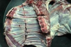 Cut lamb2